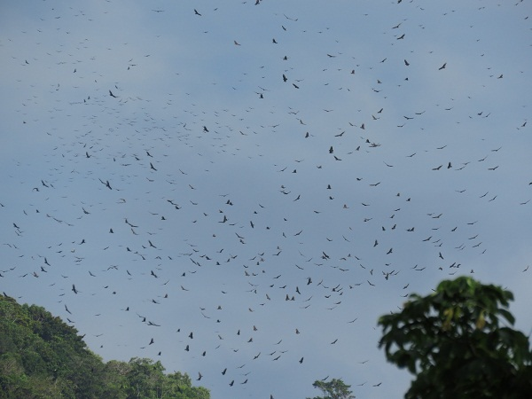 Changes in bird migration patterns associated with human induced mortality - Palacula - 2016 - Conservation Biology - Wiley Online Library